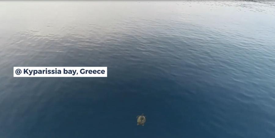 Nesting Monitoring in Kyparissia Bay Greece
