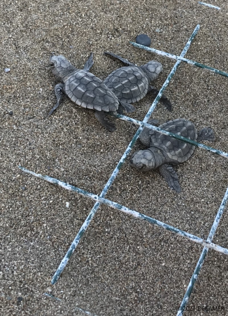 """""""Fighting"""" for Turtles! A Story of Conservatio..."""